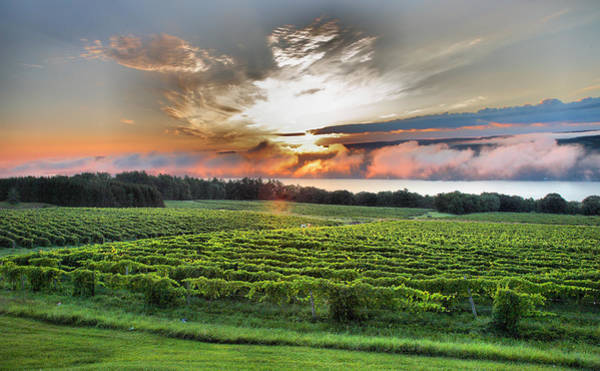 Upstate Photograph - Vineyard At Sunrise by Steven Ainsworth