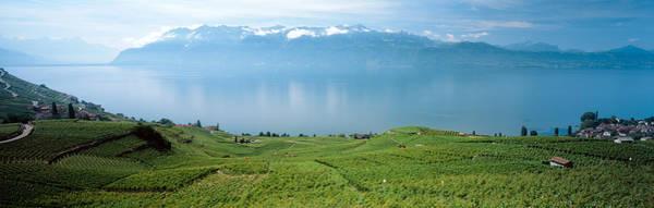 Lake Geneva Photograph - Vineyard At The Lakeside, Lake Geneva by Panoramic Images