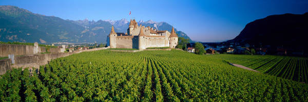 Vin Wall Art - Photograph - Vineyard In Front Of A Castle, Aigle by Panoramic Images