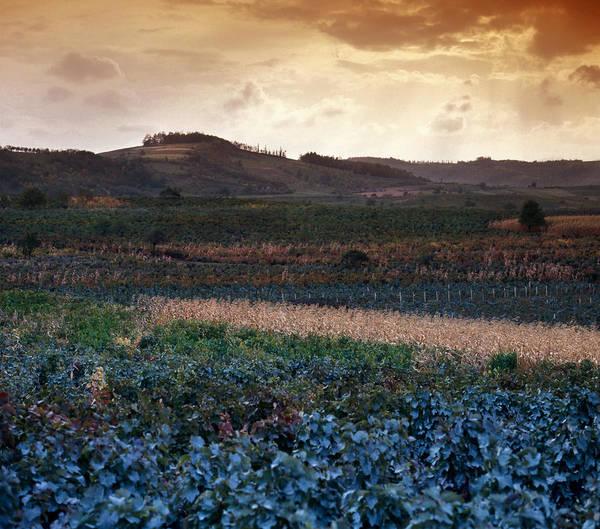 Balkan Peninsula Photograph - Vineyard In Krushevac. Serbia by Juan Carlos Ferro Duque