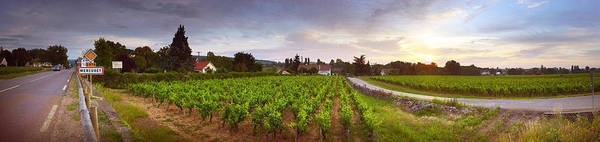 Peacefulness Photograph - Vineyard, Mercurey, France by Panoramic Images