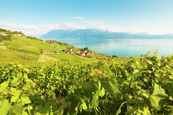 Rhone River Photograph - Vineyard Near Lac Leman by Xenotar