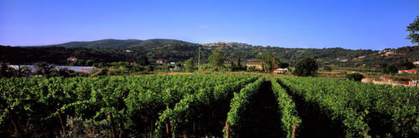 Elba Photograph - Vineyard, Portoferraio, Island Of Elba by Panoramic Images