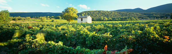 Humid Photograph - Vineyard Provence France by Panoramic Images