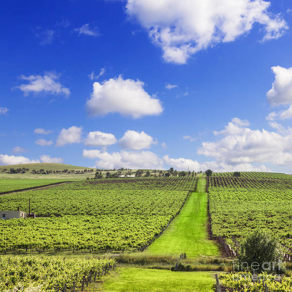 Clare Photograph - Vineyard South Australia Square by Colin and Linda McKie