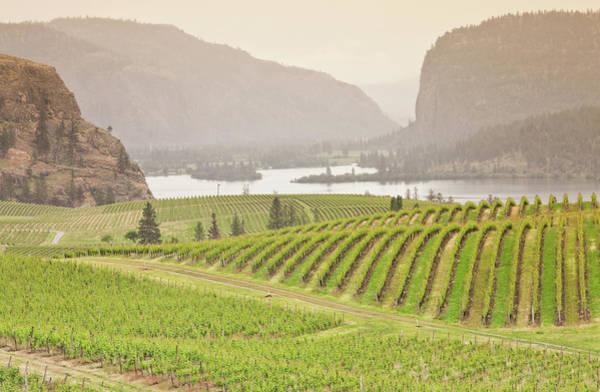 Okanagan Wall Art - Photograph - Vineyards by Imaginegolf