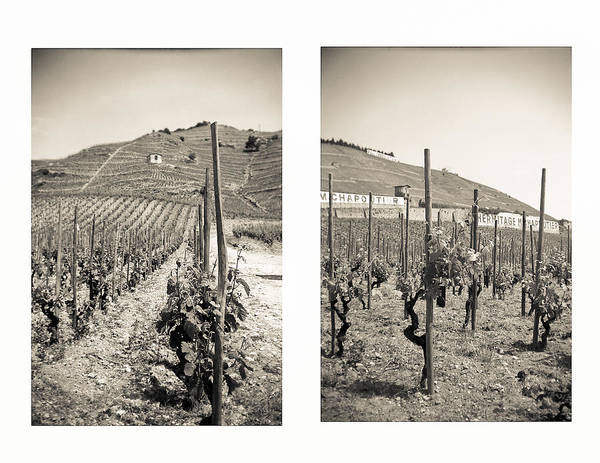 Photograph - Vineyards by Matthew Pace