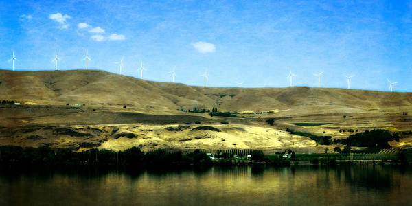 Photograph - Vineyards On The Columbia River by Michelle Calkins