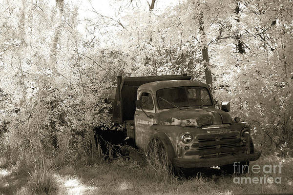 Pick Up Truck Photograph - Vintage American Dodge Truck - Abandoned Vintage American Truck Sepia Print by Kathy Fornal