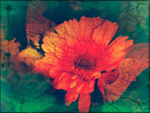 Photograph - Vintage Aster by Sherry Flaker