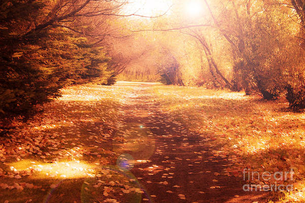 Photograph - Vintage Autumn Path by Rachel Duchesne