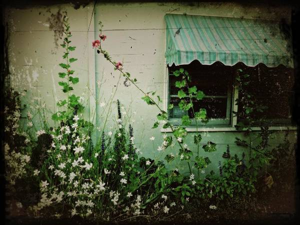 Photograph - Vintage Awning by Patricia Strand