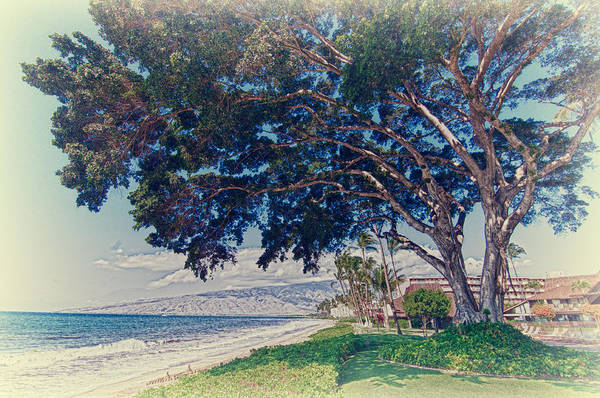 Photograph - Vintage Banyan Tree by Trever Miller