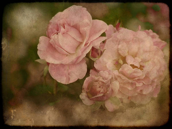 Photograph - Vintage Beauties by Lucinda Walter