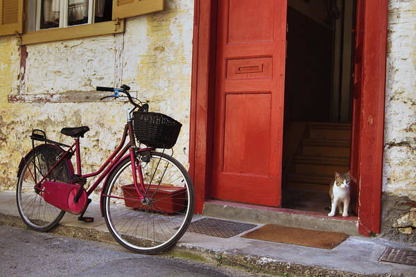 Vintage Bicycle And Cat On The Street Art Print