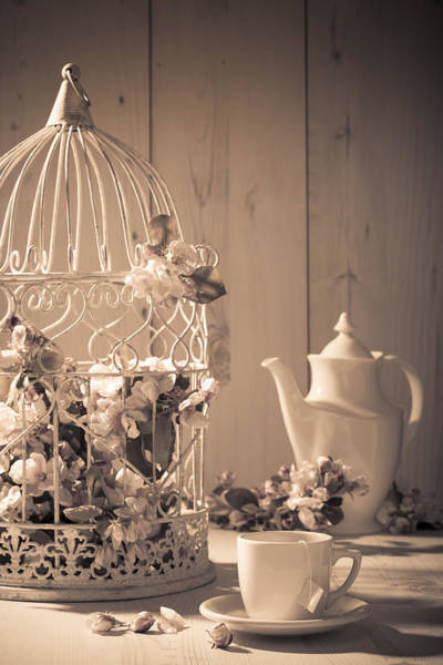 Saucer Photograph - Vintage Birdcage by Amanda Elwell