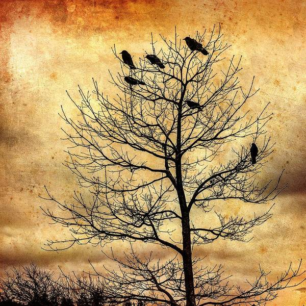 Photograph - Vintage Blackbirds On A Winter Tree by Roxy Hurtubise