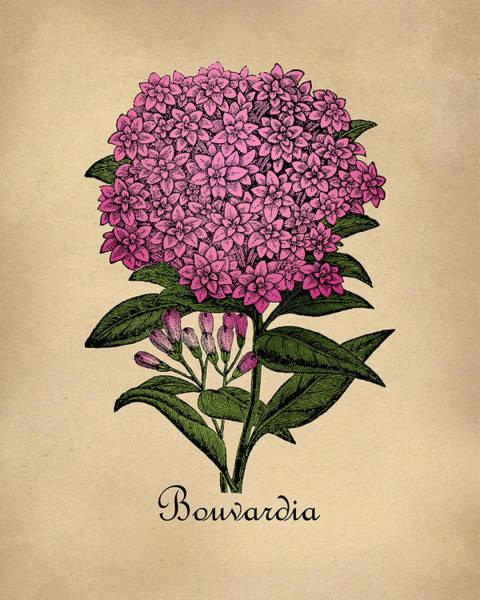 Wall Art - Digital Art - Vintage Bouvardia Botanical by Flo Karp