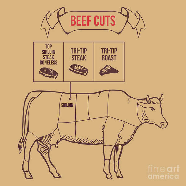 Wall Art - Digital Art - Vintage Butcher Cuts Of Beef Scheme by Dimair