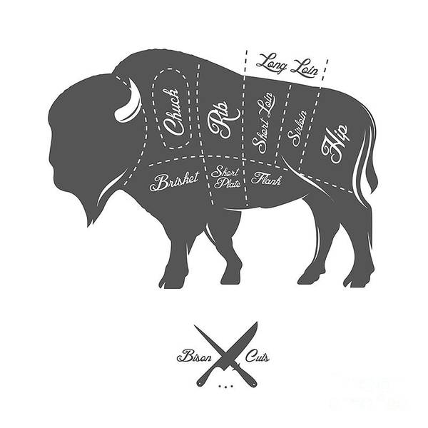 Monochrome Digital Art - Vintage Butcher Cuts Of Bison Buffalo by Ivan Baranov
