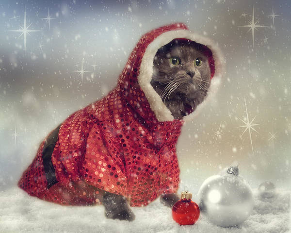 Photograph - Vintage Cat Holiday by Joann Vitali