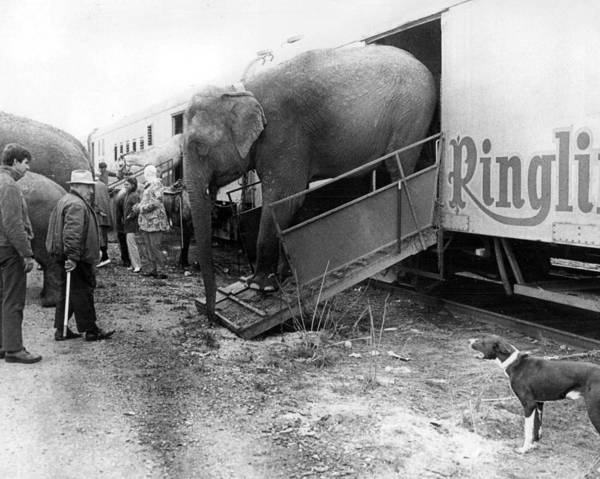 Bailey Photograph - Vintage Circus Elephant Unloading by Retro Images Archive