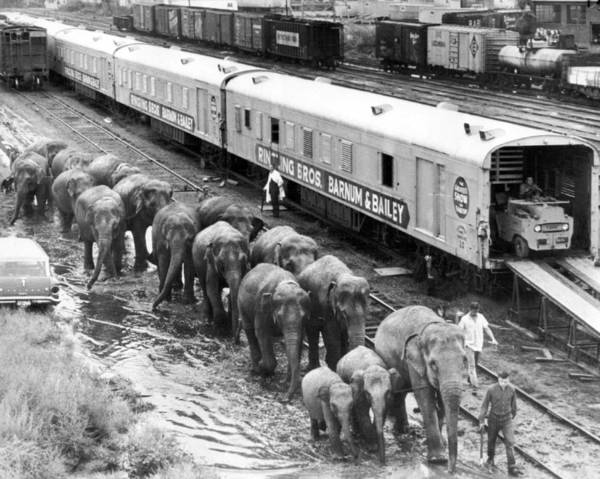 Bailey Photograph - Vintage Circus Unloading by Retro Images Archive