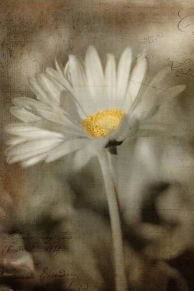 Photograph - Vintage Daisy by Joann Vitali