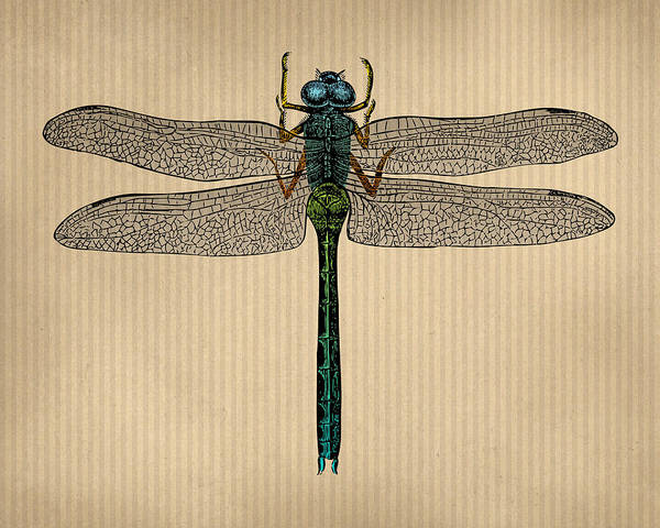 Wall Art - Digital Art - Vintage Dragonfly Tinted Engraving by Flo Karp