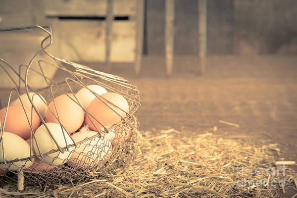Free Range Photograph - Vintage Eggs In Wire Basket by Edward Fielding