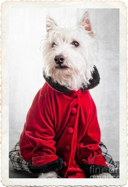 Photograph - Vintage Fashion Dog by Edward Fielding