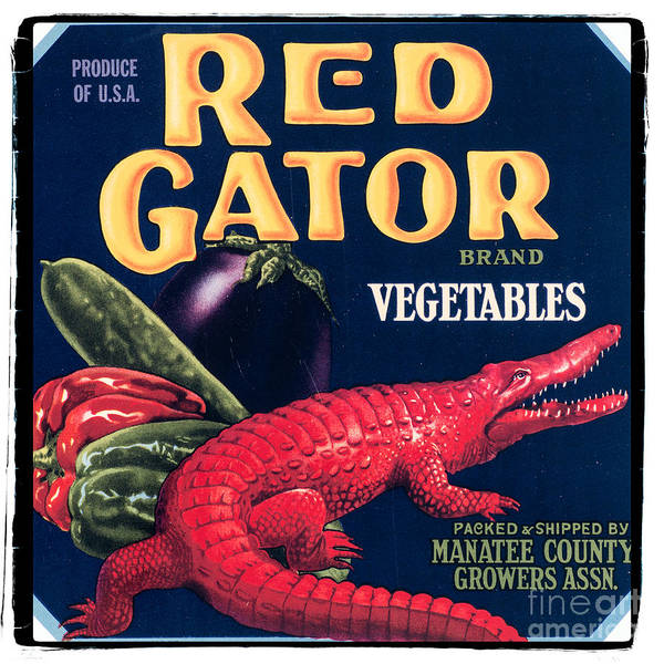 Vintage Photograph - Vintage Florida Food Signs 6 - Red Gator Brand - Square by Ian Monk