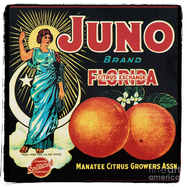 Vintage Photograph - Vintage Florida Food Signs 1 - Juno Brand - Square  by Ian Monk