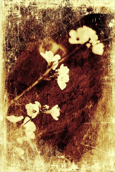 Wall Art - Digital Art - Vintage Flower by Jaroslaw Grudzinski