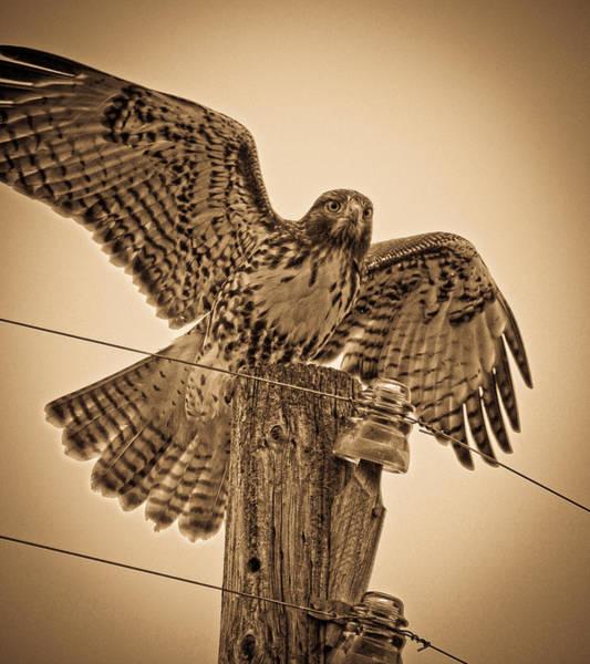 Glass Insulator Photograph - Vintage Hawk by Steve McKinzie