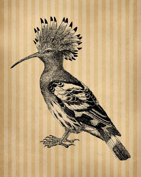 Wall Art - Digital Art - Hoopoe Bird by Flo Karp