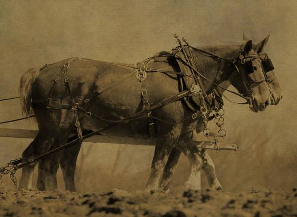 Plowing Photograph - Vintage Horse Plow by Dan Sproul