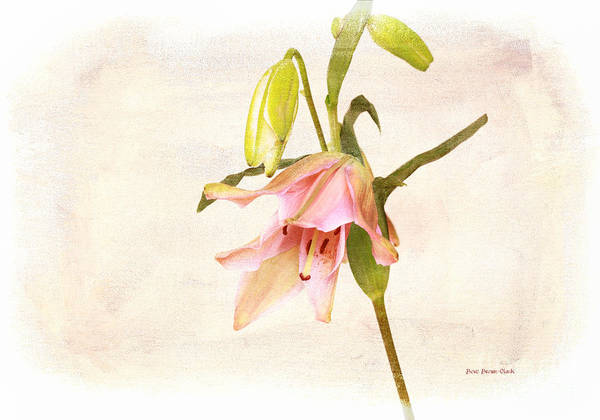 Photograph - Vintage Lily by Beve Brown-Clark Photography