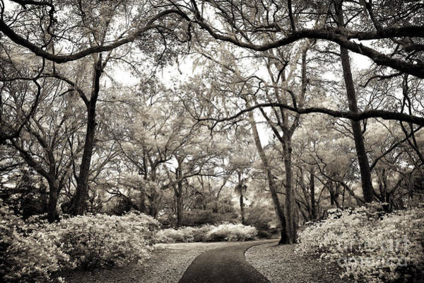Photograph - Vintage Nature Walk by John Rizzuto