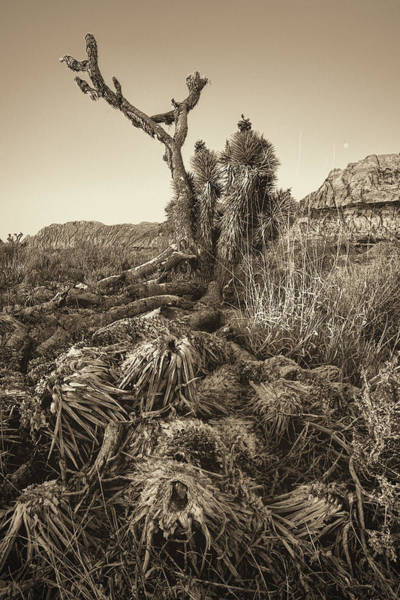 Wall Art - Photograph - Vintage Old Joshua Tree Roots by Susan Schmitz