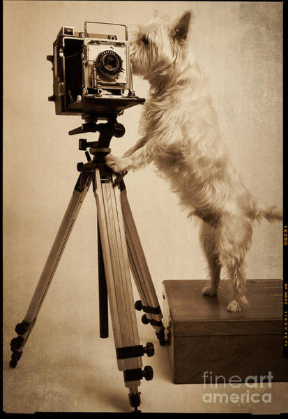 Er Photograph - Vintage Pho Dog Grapher Westie by Edward Fielding