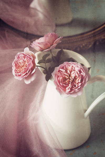 Photograph - Vintage Pink by Amy Weiss
