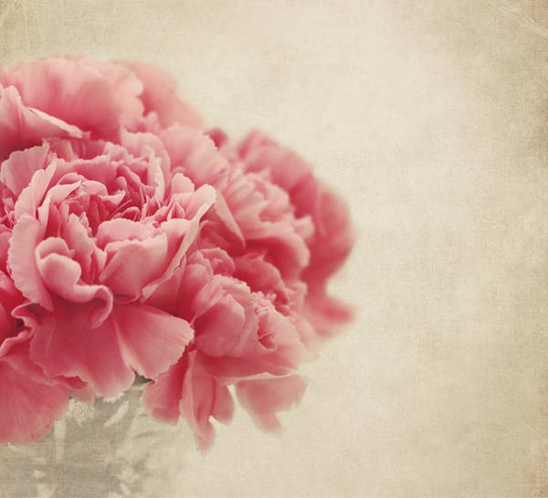 Romantic Flower Photograph - Vintage Pink Carnations by Kim Hojnacki