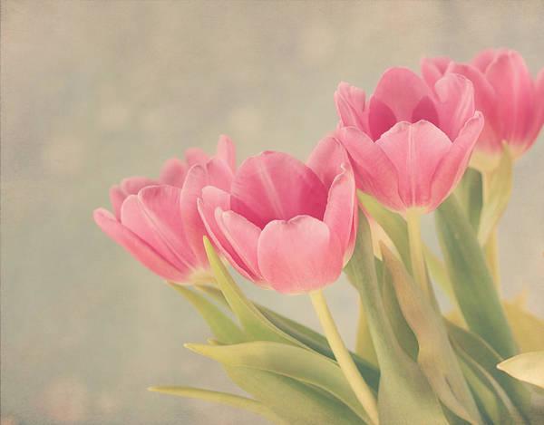 Purple Tulip Photograph - Vintage Pink Tulips by Kim Hojnacki
