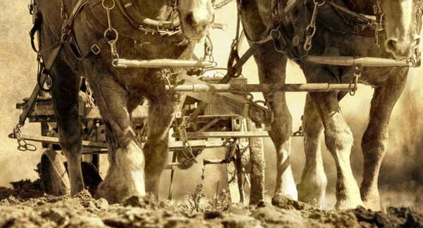 Plowing Photograph - Vintage Plough by Dan Sproul