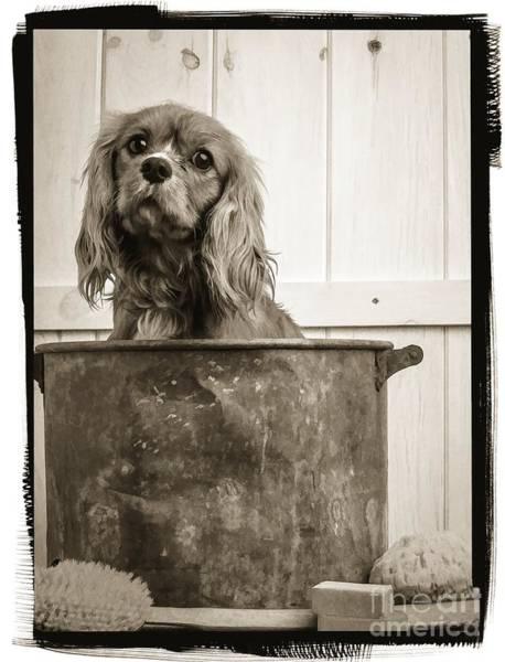 Scrub Photograph - Vintage Puppy Bath by Edward Fielding