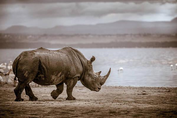 Rhinocerus Photograph - Vintage Rhino On The Shore by Mike Gaudaur