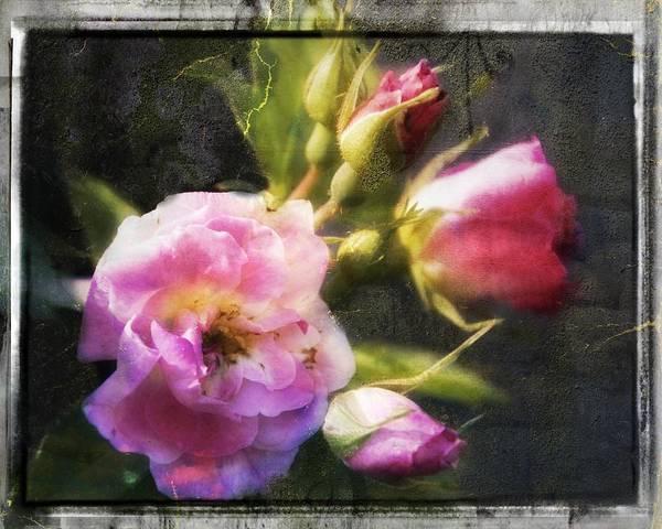 Moberly Photograph - Vintage Rose Digital Art by Matt Moberly