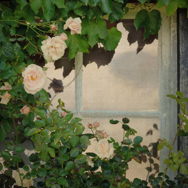 Photograph - Vintage Rose by Sally Banfill