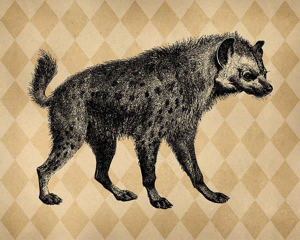 Wall Art - Digital Art - Spotted Hyena by Flo Karp